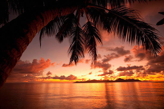 Sunset with palm tree mural for Beach sunset wall mural