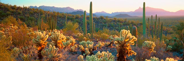 Sonoran desert organ pipe cactus national monument az for Desert mural wallpaper
