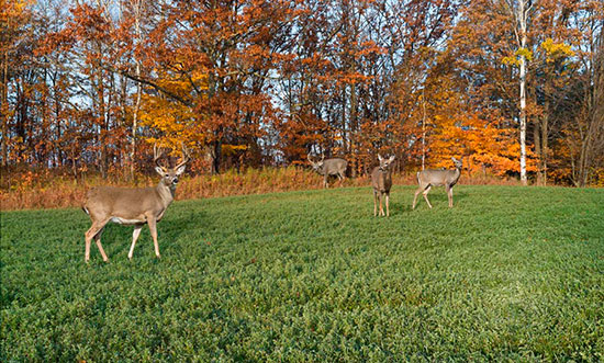 28 october memories deer ducks hunting pics photos for Deer mural wallpaper