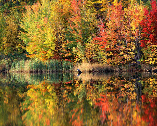 Autumn wall murals vibrant fall forest themed wallpaper for Autumn forest mural