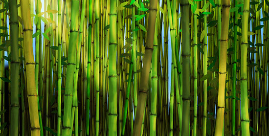 Bamboo murals beautiful bamboo forest wallpaper patterns for Bamboo mural wallpaper