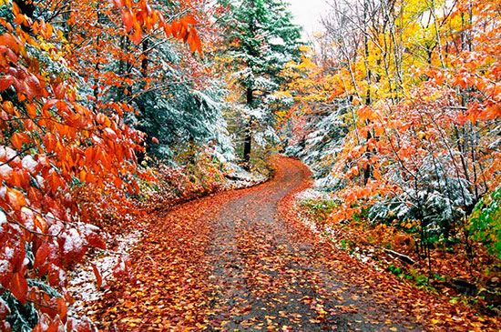 Autumn wall murals vibrant fall forest themed wallpaper for Autumn forest wallpaper mural